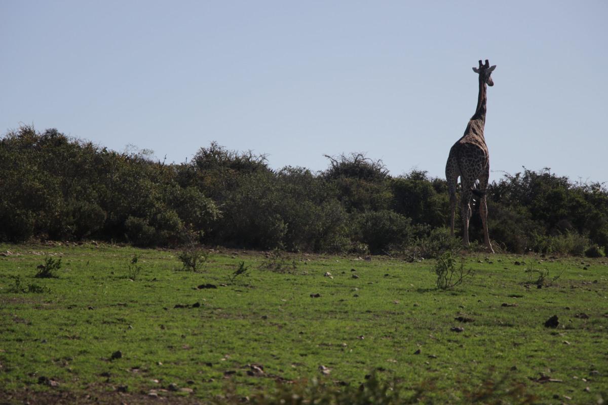 Garden Route:  Onward into the African Wild
